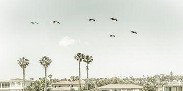 Über den Dächern von San Diego | Vintage Panorama von Melanie Viola