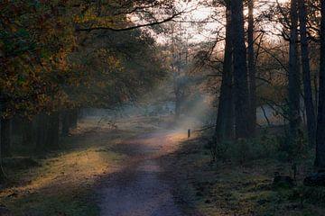 Forêt mystérieuse avec brouillard et faisceaux lumineux sur Patrick Verhoef