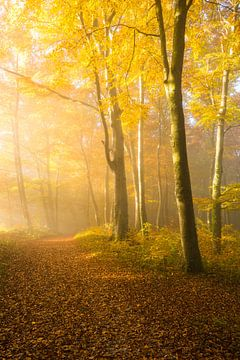 Goldener Herbst von Denis Feiner