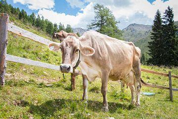 Koeien van Tirol, Oostenrijk. van Aukelien Minnema