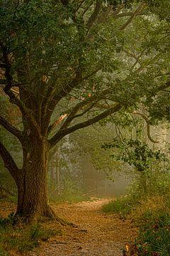 Mysteriöse Wälder von Marian Schepens