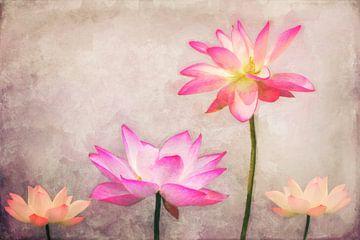 Lotus van Angela Dölling