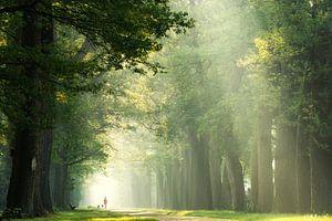 Wandeling in het bos op een vroeg lenteochtend