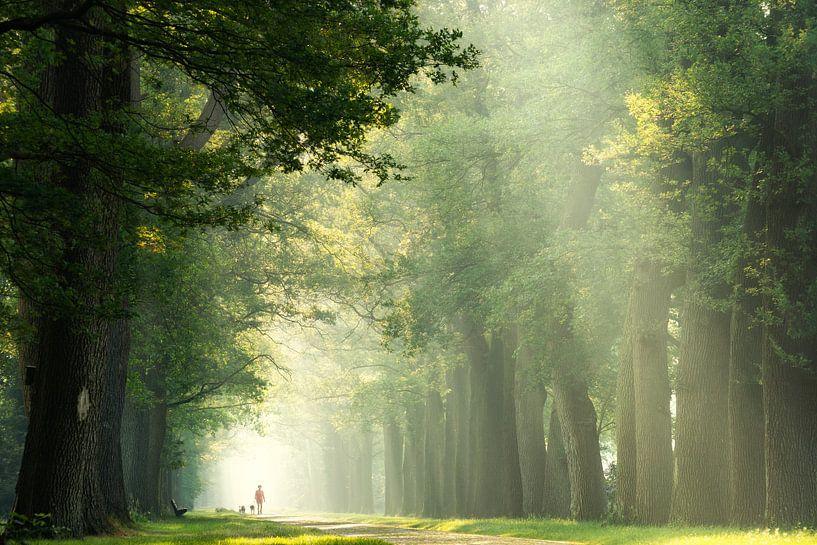 Wandeling in het bos op een vroeg lenteochtend van Martin Podt