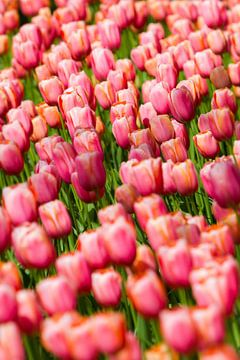 Tulpen zee van Marco Willemsen