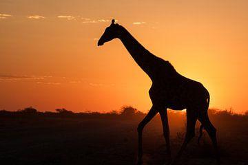 Giraffe bij zonsondergang in Namibië von Simone Janssen