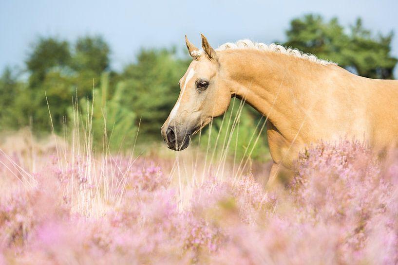 Paard in de roze heide van Yvette Baur