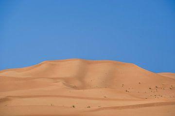 Zandduin in Al Ain von Pieter van Roijen