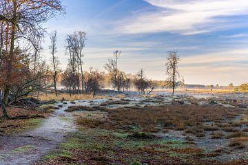 Neblige Morgenlandschaft Strabrechtse Heidekraut von Joy van der Beek
