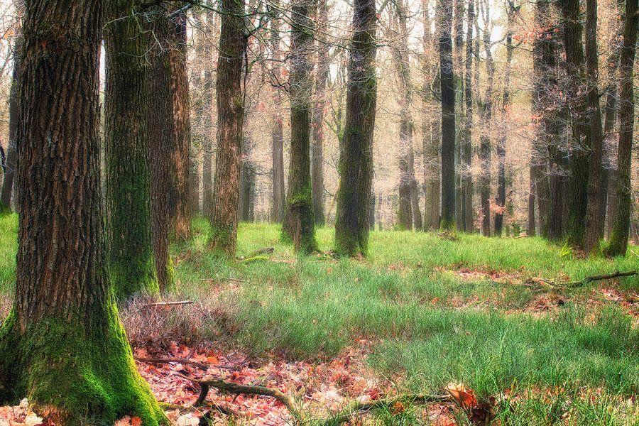 Magic Forest l van Rigo Meens
