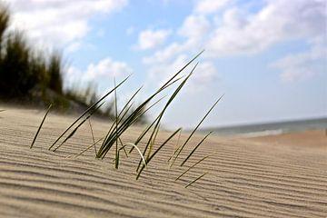 gras in het zand van