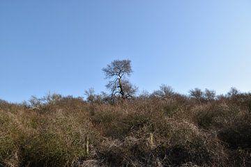 Baum über der Düne von Patricia van den Bos