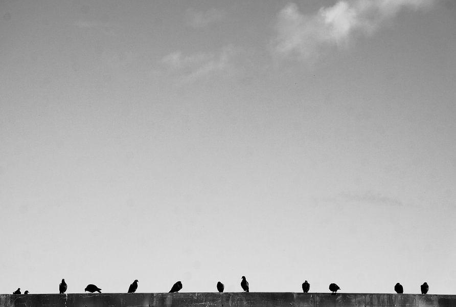 For the Birds.  von Tina Hartung
