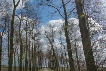 Bomenrij op Noord beveland van Teus Reijmerink