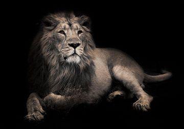 bête lunaire (cendrée). Magnifique lion aristocrate dans la nuit. Un lion mâle puissant à la crinièr sur Michael Semenov