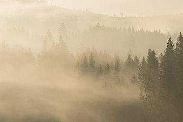Het bos ontwaakt tijdens de vroege uurtjes van Mindy Molein