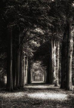 Volg Het Licht von Andrea Otte