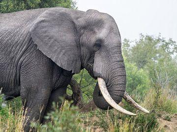 Elefant Nahaufnahme von Karin vd Waal