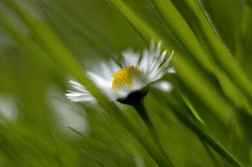 Liefje in het gras van Koos Haantjes