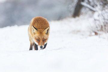 Winter von Pim Leijen