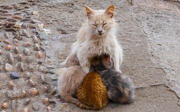 Kat met kleintjes van