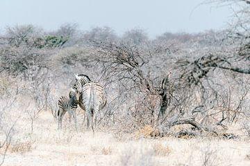 Zebras in Etosha National Park || Namibië, Wildlife fotografie, Art print van Suzanne Spijkers