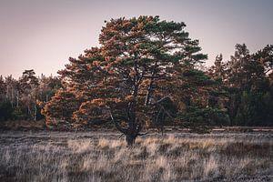 Baum bei Sonnenuntergang von Jayzon Photo