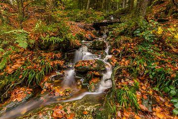 Herfst langs de Hoëgne Rivier in de Ardennen van Bert Beckers