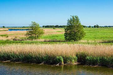 Landschap aan de Prerowstroom op de Fischland-Darß van Rico Ködder