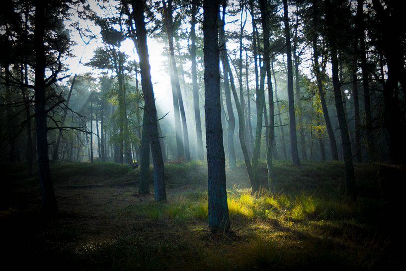 Ochtendgloren in het bos van denk web
