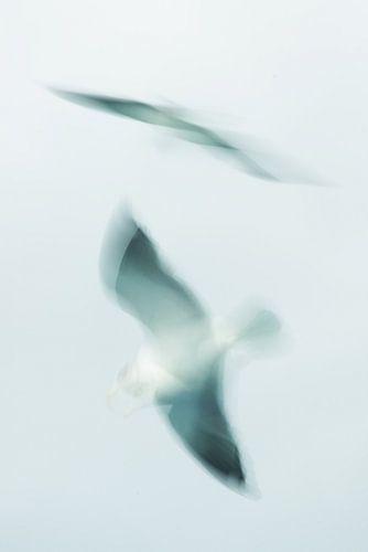 Zeemeeuw in vogelvlucht.