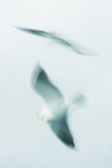 Zeemeeuw in vogelvlucht. van KO- Photo