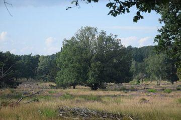 arbre dans la lande