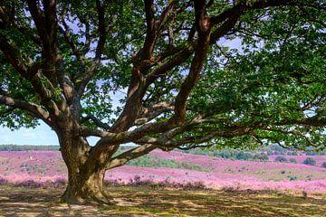 Blühende Heidehügel bei der Posbank im Nationalpark Veluwezoom von Sjoerd van der Wal