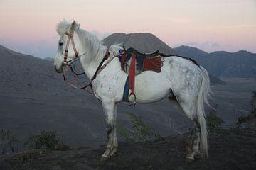 gezadeld paard  bij Bromo van wil spijker