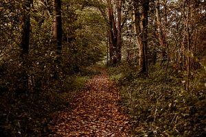 Wald im Hoeksche Waard von Suzanne Fotografie