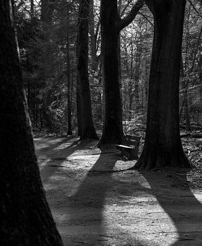 Lente in het park van Maurits van Hout