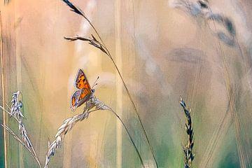 Kleine vuurvlinder tussen het gras van Mark Scheper