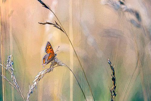Kleine vuurvlinder tussen het gras