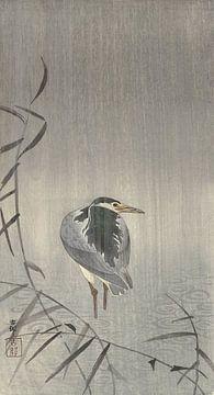 Quaken im Regen von Ohara Koson