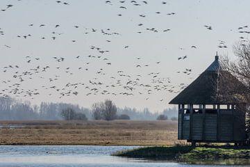 vogelkijkhut Ezumakeeg Zuid van Harry Siegers