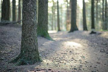 Forest sunrise van Jelle Dekker