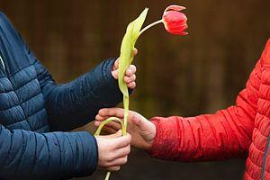 De liefde die tulp heet van Maren Oude Essink