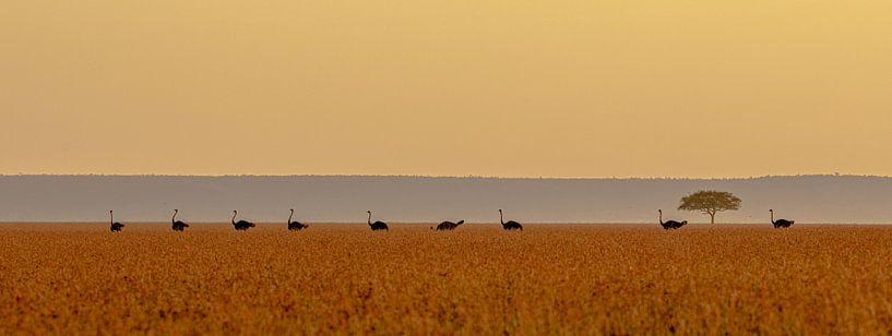 Gestroomlijnd landschap van Sharing Wildlife
