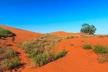 Rode zandduinen met begroeïng van struiken van Henk van den Brink