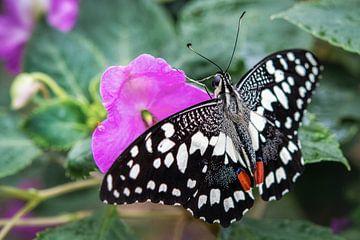 Sonder Schmetterling auf einer rosa Blume von Rietje Bulthuis