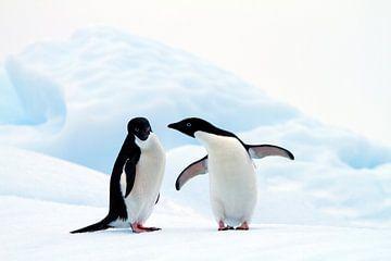 Adelie Pinguine von Angelika Stern