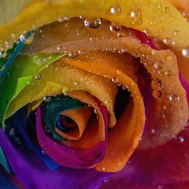 Regenboog Roos van Karin aan de muur