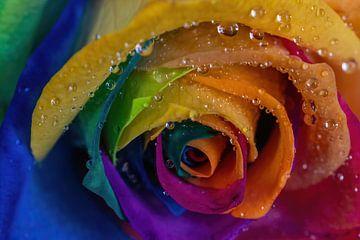 Regenbogen Rose von Karin aan de muur