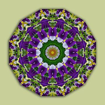 Flower Mandala, Pansies green, violett van Barbara Hilmer-Schroeer